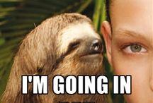 Sloths!!! / by Cari Whittenburg