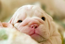 Puppy & Sweet Dog Therapy / by Debra Slack