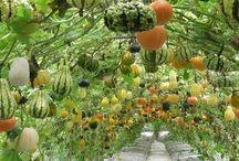garden / by Kathy Lybrook