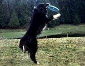 Dog training / by Ula Lala