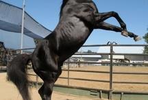 Horses in Movies / by ilovehorses.net