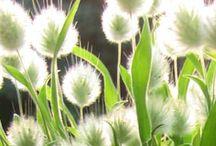 Fleurs et jardins / by Marise