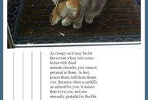 Crazy cat lady / by Ashley Baxter