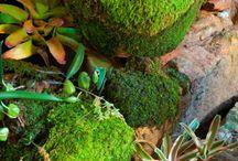 Garden / by Juli DeVries