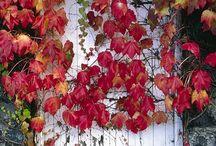 Autumn / by Rebecca Deeprose