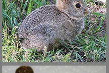 Rabbits / by Home Farm Ideas