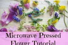 pressed flower crafts / by Ashley Dollar