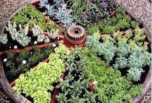 Gardening / by Dianne Deming