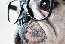 Pets / by Victor Gonzalez Canito