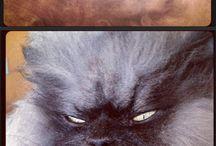 Sinister cat scares me... / by Jennifer Heard