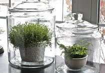 gardening / by Diane Gordon