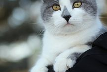 Animals that I love / Looks at all that faces !!! TO CUTE / by Nina lamlang Diamond forever
