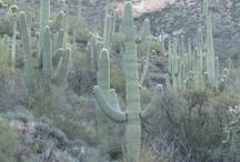 Arizona / Heaven is a hot and blazing desert! / by Steve Garufi