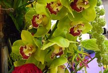 Fleurs / by Mary Tig