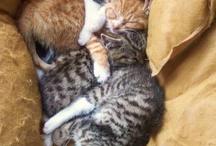 kitties / by Lisa LaFebre