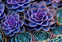 Succulents and Cacti / Amazing Colors and textures are found in these heat loving plants. / by Leslie Aitken