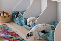 Dog ideas!  / by Hailee Piotrowski