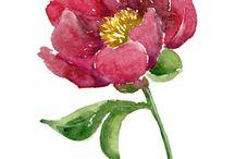 Watercolor / by Mollie Faye