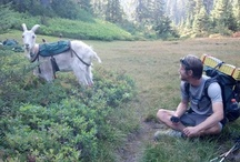 Hiking & Backpaking / Because. I like to hike. / by Tina D.