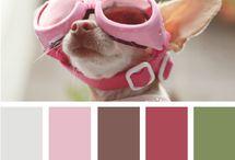 Chihuahuas :) / by Nikki