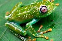 Fantastic Frogs / Ribbit Ribbit / by Jean Black