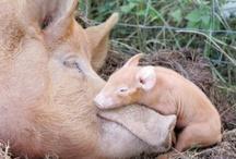 Raising Piggy.. / by Tessa