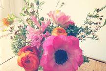 blooms / by Amanda