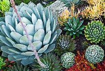 Succulents inspiration / by Sherri Joseph