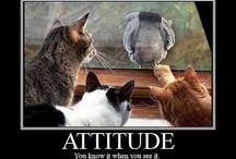 animals :) / by Katie Sullivan