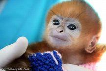 Cute Animals  / by Ashley Thompson