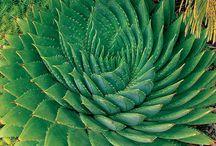 Green Thumb / by Lisa Harrison