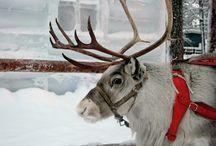 Sleighbells Ring: Christmas Decor Ideas, Treats, & Inspiration / Walking around the Christmas tree ... / by Carmen P