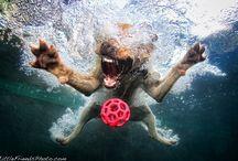 Dogs / by Sebastian Crantz