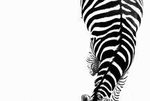 Black & White / by Debbie Warren-Berry