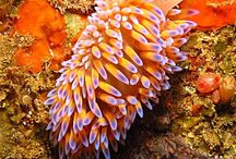 Nature Scuba Dive Cape Town / Nature scuba diving (or reef dives) in Cape Town is ideal for those starting out in scuba diving. Typically these dives only require Open Water certification. With our reef dives you get the opportunity to explore the wonders of Cape Towns Oceans. / by Into the Blue Scuba Centre