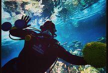 Insta-Takeover! / by National Aquarium