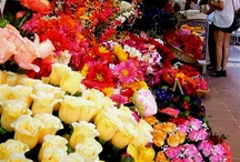 """Flower shop"" / by Verbena Flores"