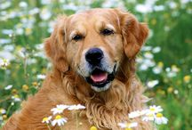 Warm and Fuzzy / Dogs, dogs and more dogs / by Caroline McNulty