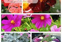 Flowers & outdoor ideas / by Teresa Keown