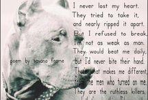 Doggies / by Amanda Messer