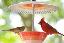Birds and Bird Stuff / by Sabrina Hobbs McNair