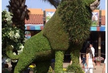Grass Sculptures and Topiaries / Grass can be used in many more ways than just a lawn you mower with your mower, throw in topiaries and they can make for some interesting looks. It's a true art form! / by Plant Care Today