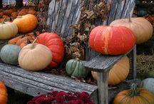Autumn Splender / by Laurise Hunt