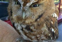 I love Owls / by Treasure Valley Water Gardens