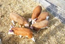 Idea's for our Farm / by Robin Wheeler Lockbeam