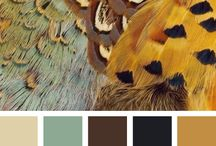 Color Story / by Alisha Sommer