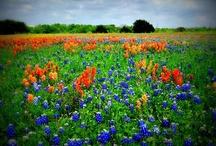 Texas / by Eryn Tormos