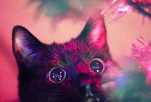 cats...weird and funny / by Kendall Hendler