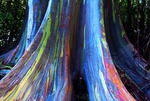 trees / by Kate McCredie