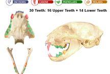 Dental Health / by VCA Animal Hospitals